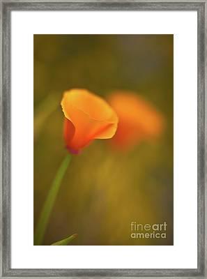 Golden Edges Framed Print by Mike Reid