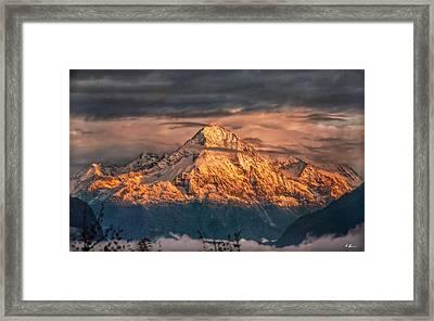 Golden Evening Sun Framed Print