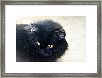 Golden Eyes Framed Print by Camille Lopez