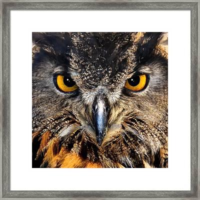 Golden Eyes - Great Horned Owl Framed Print