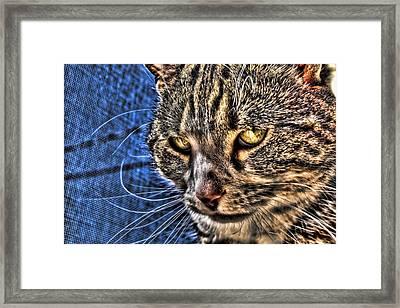 Golden Eyes Framed Print by Joetta West