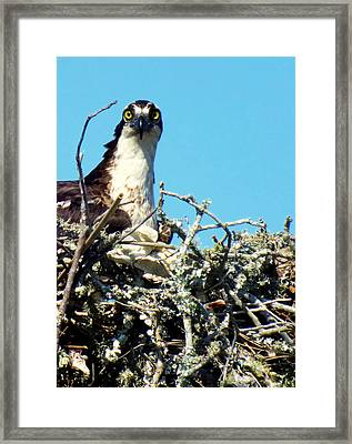 Golden Eyes Framed Print by Karen Wiles