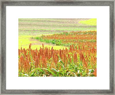 Golden Field In Dry Brush Framed Print by James Granberry