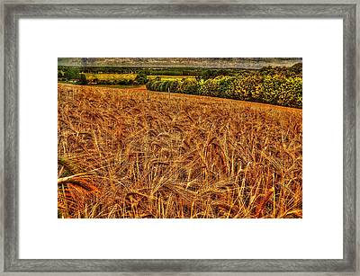 Golden Field In Normandy Framed Print
