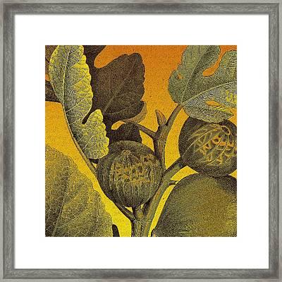 Golden Fig Framed Print