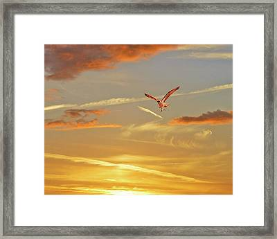 Golden Flight Framed Print by Adele Moscaritolo