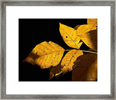 Golden Glow Framed Print by Christopher Holmes