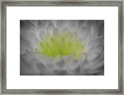 Golden Glow Framed Print