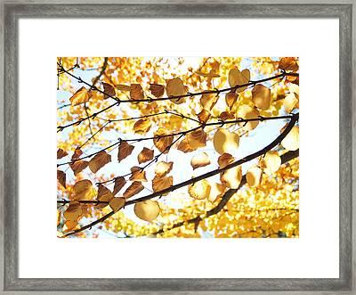 Golden Glow Framed Print