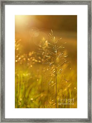 Golden Glow Framed Print by Sandra Cunningham