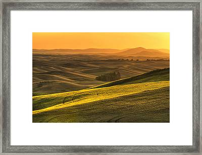 Golden Grains Framed Print by Mark Kiver