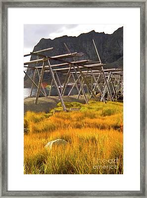 Golden Gras And Fish Drying Rack Framed Print by Heiko Koehrer-Wagner