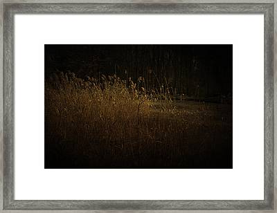 Framed Print featuring the photograph Golden Grass by Ryan Photography