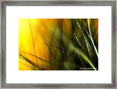 Golden Green Field Framed Print by JCYoung MacroXscape