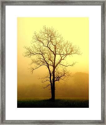 Golden Haze Framed Print by Marty Koch