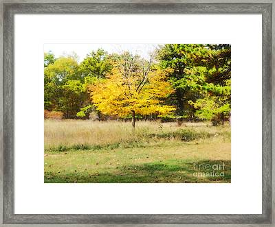 Golden Haze On The Meadow At Connetquot State Park, Long Island Framed Print