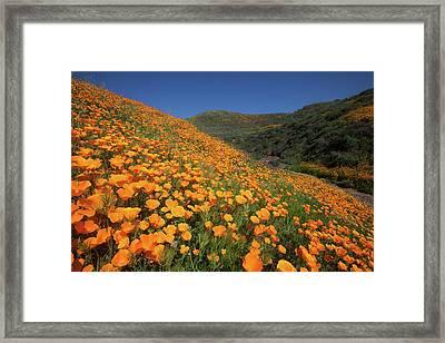 Framed Print featuring the photograph Golden Hillsides by Cliff Wassmann