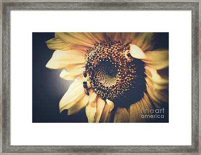 Golden Honey Bees And Sunflower Framed Print by Sharon Mau
