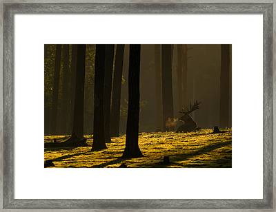 Golden Hour Framed Print by Andy Luberti