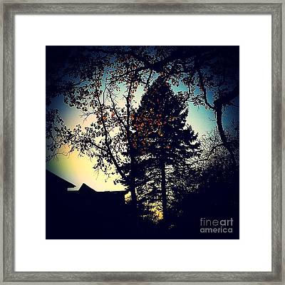 Golden Hour Foliage Framed Print by Frank J Casella