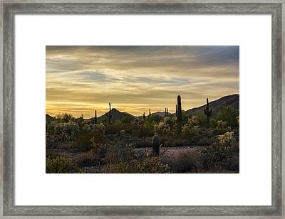 Golden Hour In The Sonoran  Framed Print by Saija  Lehtonen