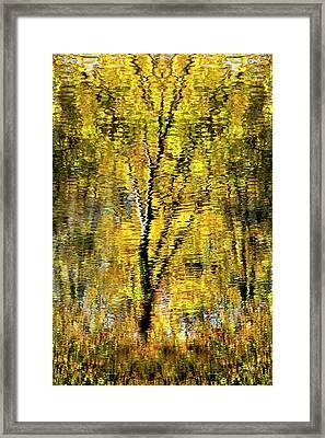Golden Impressionist Tree Reflection Framed Print by Christina Rollo
