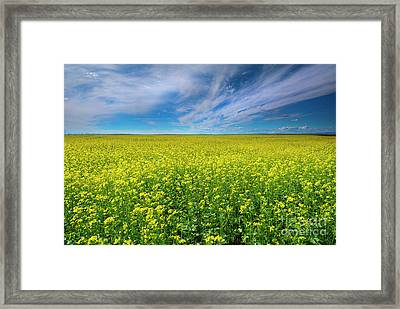 Golden Infinity Framed Print by Mike Dawson