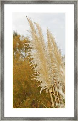 Golden Framed Print by Jean Booth