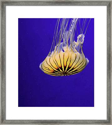 Golden Jellyfish Framed Print by Rosalie Scanlon