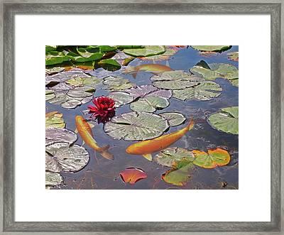 Golden Koi Pond Framed Print by Gill Billington