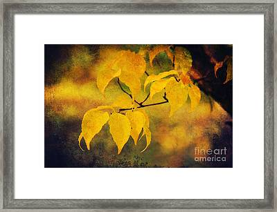 Golden Leaf Framed Print by Angela Doelling AD DESIGN Photo and PhotoArt