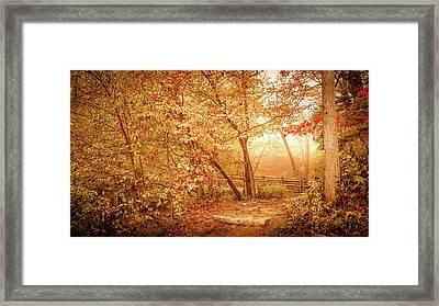 Golden Light In Woods Framed Print by Art Spectrum