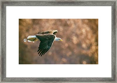 Golden Light Framed Print