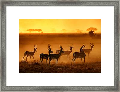 Golden Light Framed Print by Mathilde Guillemot