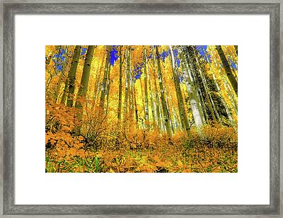 Framed Print featuring the photograph Golden Light Of The Aspens - Colorful Colorado - Aspen Trees by Jason Politte