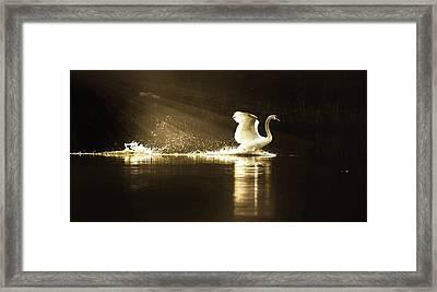 golden Light Framed Print by Rose-Marie Karlsen