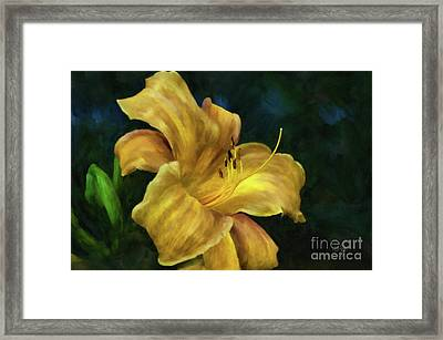 Golden Lily Framed Print by Lois Bryan