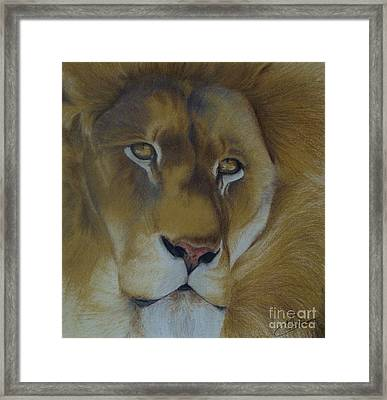 Golden Lion Framed Print by Amy Hodgkinson