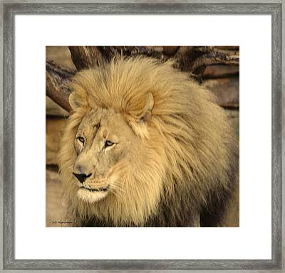 Golden Lion Framed Print