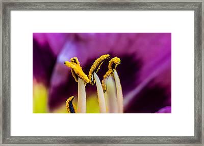 Golden Macro Framed Print