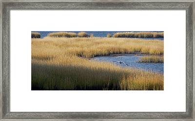 Golden Marsh Grass Against Deep Blue Water With Seagull Framed Print by Tim Bond