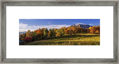 Golden Meadow Framed Print