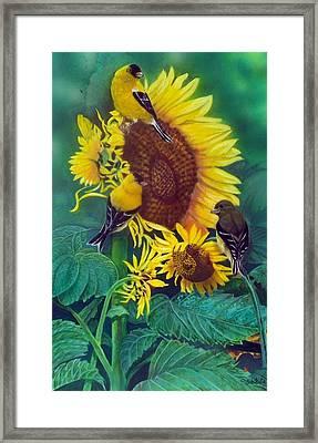 Golden Morning  Sold Framed Print