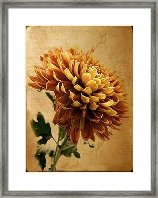 Golden Mum Framed Print by Jessica Jenney
