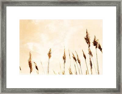 Golden Oats Framed Print by Colleen Kammerer