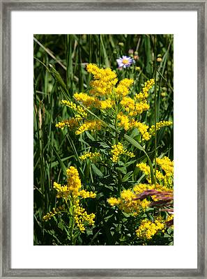 Golden October Framed Print