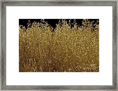 Golden Offerings Framed Print