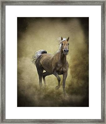 Golden One Framed Print by Ron  McGinnis