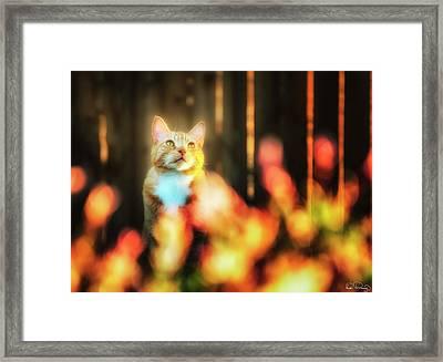 Golden Orange Tabby Framed Print