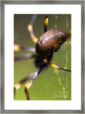 Golden Orb Spider Framed Print